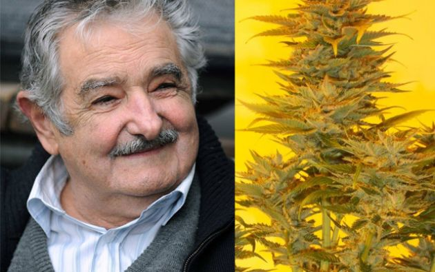 """""""Mujica gold"""" fue introducida al mercado el año pasado."""