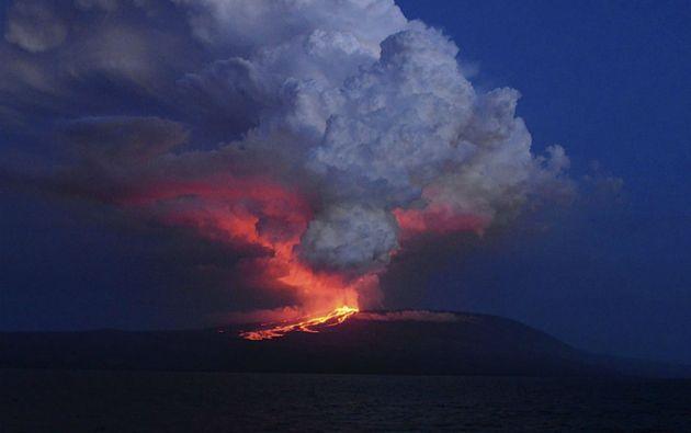 Foto: REUTERS/Parque Nacional Galápagos/DiegoParedes