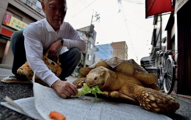 El sexagenario cuida de la tortuga desde hace 20 años. Foto: AFP