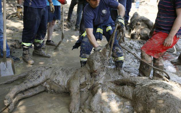 Un tigre muerto. Foto: REUTERS