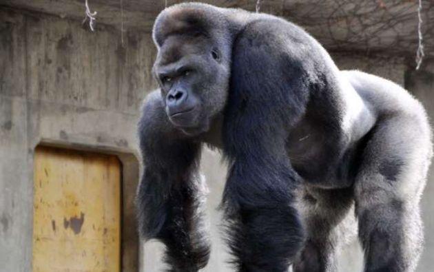 Tiene el pelo plateado y pesa 180 kilos.