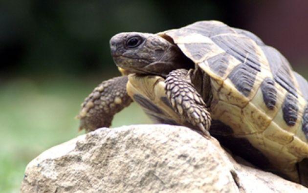 Algunos de los animales liberados hoy fueron víctima del tráfico de especies silvestres. Foto: Ecuavisa.com