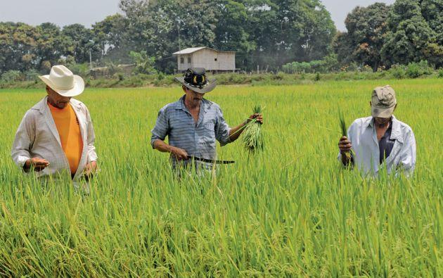 Emprendimiento. Los habitante de El Jigual se dedican principalmente al cultivo de arroz. Pero debido a lo impredecible del tiempo, ellos recibieron capacitación para impulsar negocios como tiendas. Foto: Iván Navarrete