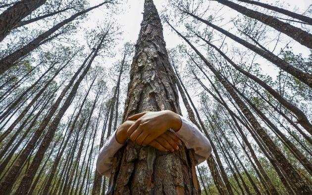 El planeta tiene actualmente tres billones de árboles.