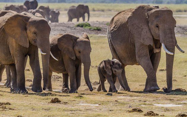 La caza furtiva es frecuente en los parques nacionales de Zimbabue, y tiene como objetivo principal los elefantes y los rinocerontes.