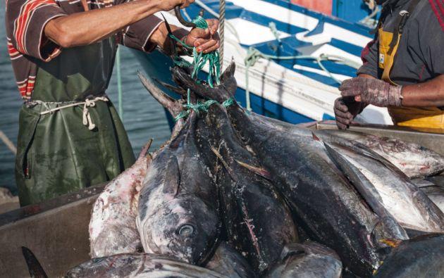 """""""El agotamiento de los recursos pesqueros es real, y lamentablemente es algo que, de mantenerse las tendencias actuales, sigue en su curso hacia una crisis""""."""