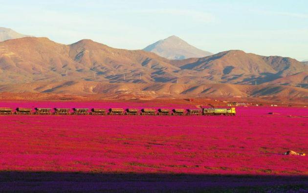 Desierto de Atacama. Foto: Tomás Cuadra (@toroco_vallenar)