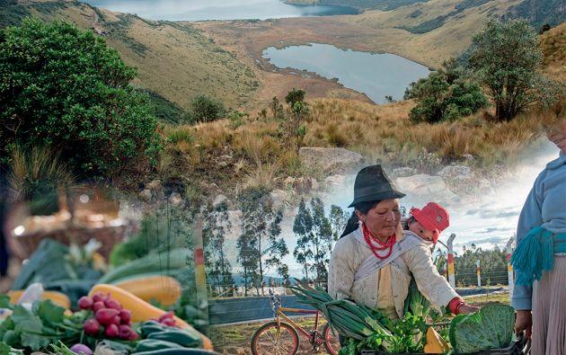 San Luis de Ichisí (Tabacundo, Pichincha) sufre de sequía por estar en zonas bajas. Son los primeros en ejecutar un proyecto de adaptación al cambio climático. Su fuente natural son las lagunas de Mojanda, en el páramo. Fotomontaje: Daniel Valverde
