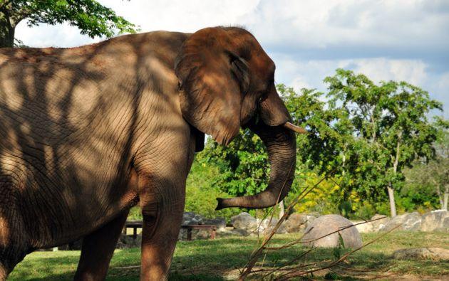 Foto: Zoológico de Miami