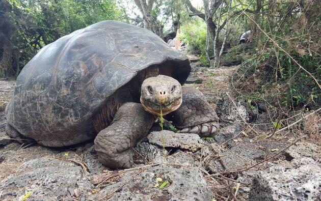 Foto: Facebook / Parque Nacional Galápagos