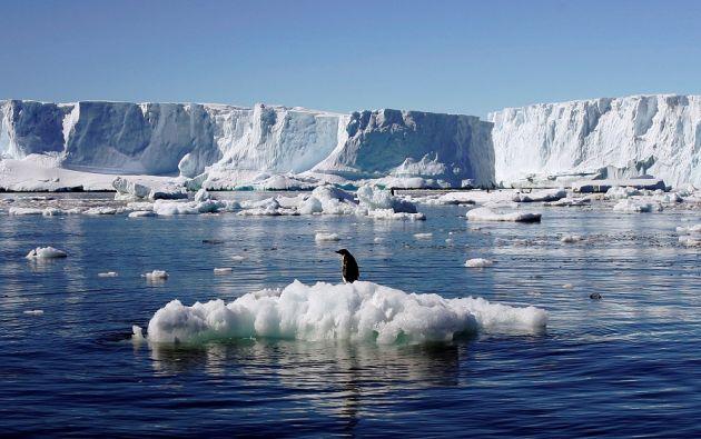 Algunas de estas investigaciones upervisarán las poblaciones de especies amenazadas como albatros y pingüinos. | Foto: REUTERS.