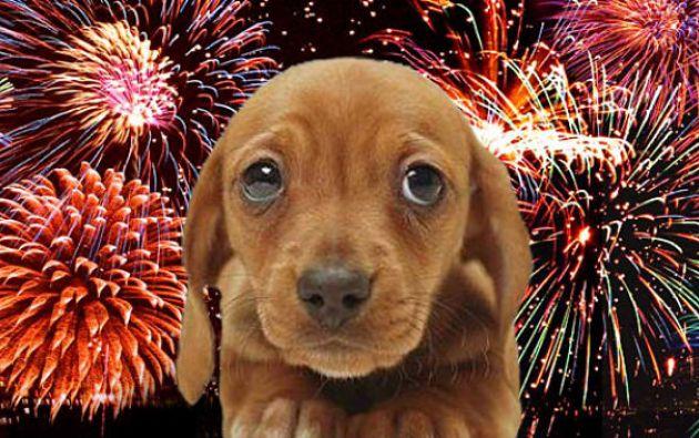 Veterinarios recuerda que la pirotecnia causa taquicardia en algunas mascotas. Foto: Tomada de Mascota fiel.
