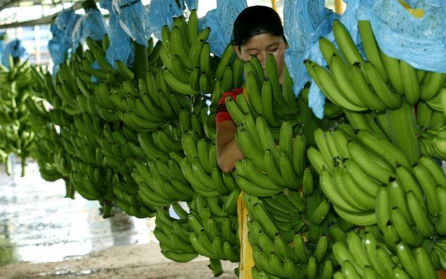 Foto: Tomada de Revista El Agro