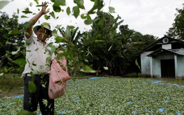 """Queremos garantizar coca de por vida"", dijo Evo.| Foto: Reuters."