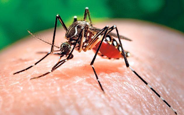 Themis Bioscience es una empresa internacional especializada en el desarrollo de vacunas contra enfermedades tropicales infecciosas. Foto: La Nación