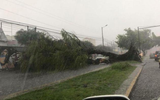 El colapso de una alcantarilla, árboles caídos y calles inundadas, fueron algunas de las consecuencias de la lluvia de ayer. Foto: Redes sociales.