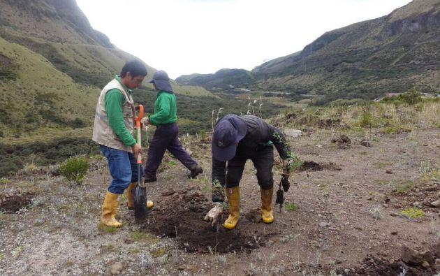 """La Alcaldía de Quito ha liderado la siembra de un millón de árboles como parte del programa de reforestación en busca de una ciudad """"sostenible"""". Foto tomada del Twitter de Mauricio Rodas."""