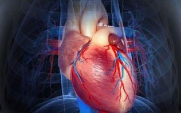 la mayor ventaja es que les permite acceder a la vez a las arterias coronarias y a las venas cardíacas. Foto referencial
