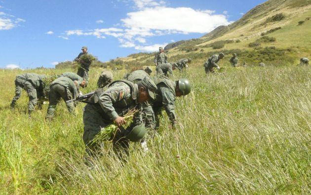 En Alausí, la brigada blindada de Galápagos ha aceptado que los cultivos de amapola son un problema. Foto: Cortesía