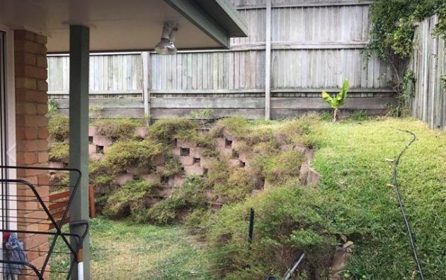 Muchos usuarios confiesan lo difícil que les resulta a veces encontrar a los reptiles en las imágenes debido a su camuflaje natural. Foto: Sunshine Coast Snake Catchers