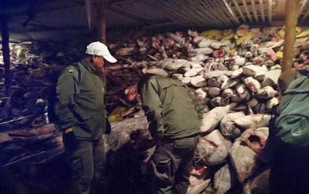 Unas 300 toneladas de pesca, incluyendo tiburones martillo, en peligro de extinción, fueron descubiertas en un carguero chino en Galápagos. Foto: AFP