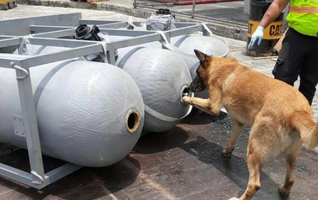 """El perro antidroga """"Gasko"""" dio la alerta en el control efectuado. Foto: ministerio del Interior"""