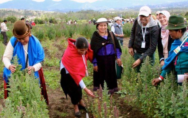 Según comunicado de la FAO, el propósito de la reunión será revisar el estado de los alimentos y las cifras agrícolas en la región. Foto: El Ciudadano