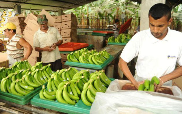 La guía, desarrollada por la FAO y Ecuador, servirá a unos 250.000 trabajadores directos y unos 2 millones de empleados. Foto: archivo