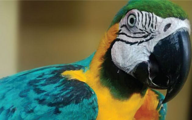 Determinaron que el ave se encuentra en buenas condiciones de salud, sin embargo permanecerá en período de cuarentena. Foto: Ministerio