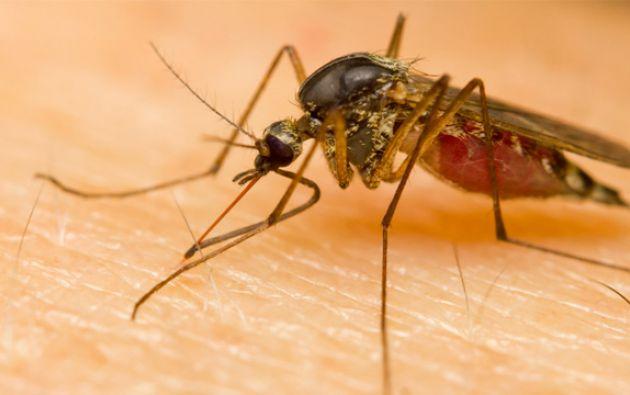 La OPS alerta del aumento de la malaria en Ecuador . Foto: Referencial