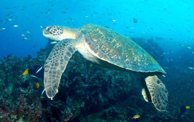 La mezcla de aguas frías y cálidas ha permitido la llegada y el establecimiento de diferentes especies. Foto: archivo