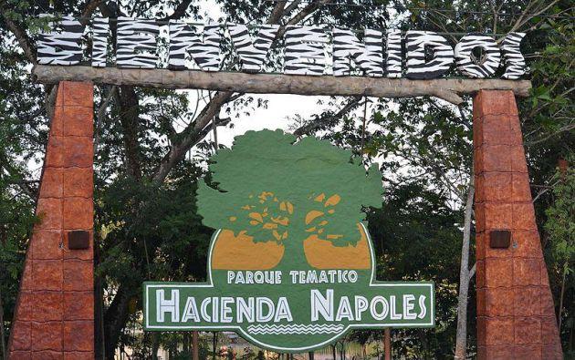 En el inventario faltaron cuatro hipopótamos que se escaparon de la Hacienda Nápoles. Foto: Wikimedia Commons