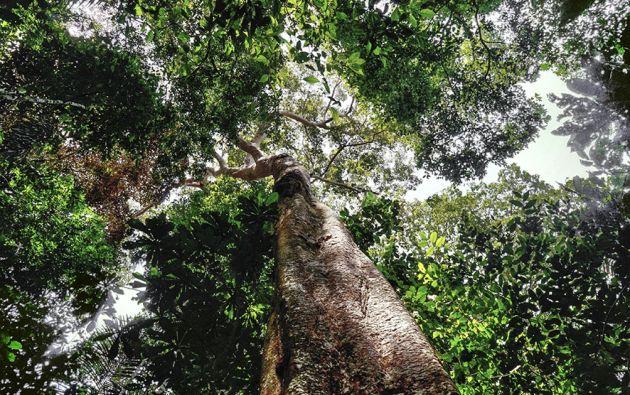 Las mafias ahora están detrás de nuevas especies forestales, pero los gobiernos no hacen nada para protegerlas.