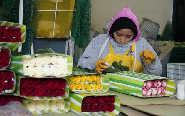 Los tres principales mercados de exportaciones de flores del Ecuador son Estados Unidos, la Unión Europea y Rusia.