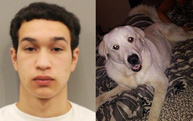 Pese a tener dos disparos en su cuerpo, el perro se levantó para morder la mano del autor del tiroteo y evitar que haga daño a su familia humana.