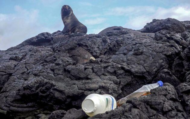 Pese a que los residuos siguen llegando con las olas, guardaparques y voluntarios recogen plástico que parece de nunca acabar en las islas. AFP