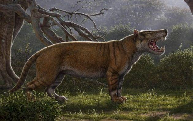 El animal pesaba unos 1.500 kg y era capaz de atacar a animales de la talla de elefantes e hipopótamos. Foto: AFP.