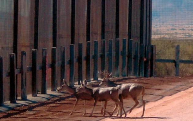 La construcción de un nuevo muro en la frontera con México perjudicará al Refugio Nacional para la Vida Silvestre localizado en el Valle Bajo del Río Grande, en Texas.