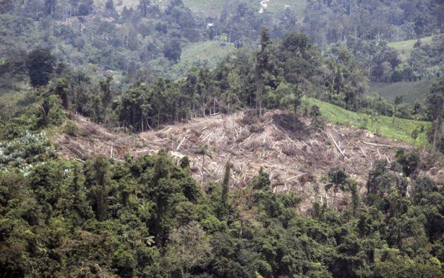 """La pérdida de mas forestal """"tiene que ser detenida en la Amazonía"""", asevera Granizo. Foto: Flickr Ministerio Ambiente"""