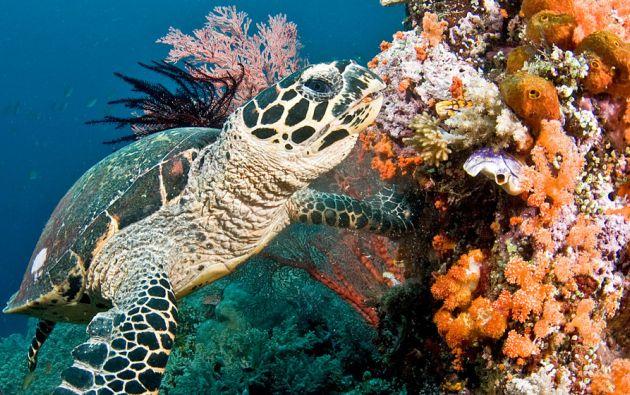 33% de las poblaciones de peces marinos en 2015 se extraen a niveles insostenibles. De hecho, el 55% de los océanos está dedicado a la pesca industrial.