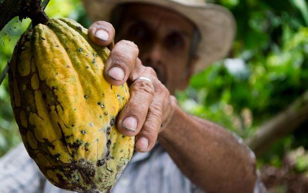 La producción y exportación de cacao en 2018 cerró con 300.000 toneladas para el país, que representan unos 663 millones de dólares. Foto referencial: Pixabay
