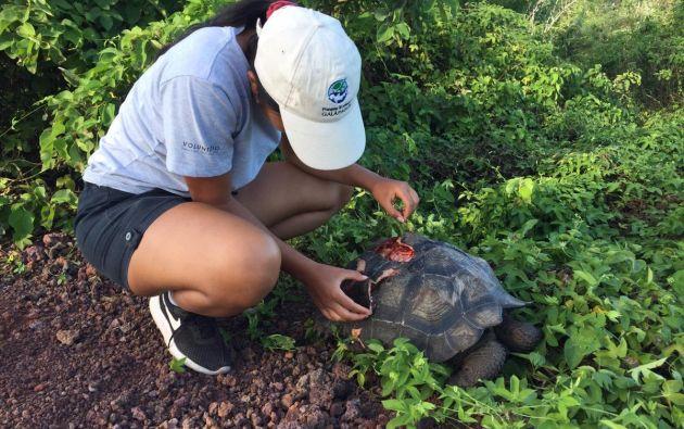 """La tortuga está recibiendo """"la atención necesaria""""."""