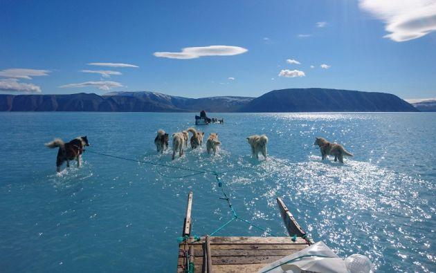 El hielo se derrite seis veces más rápido actualmente que en los años 1980. Ahora los trineos van sobre el agua. Foto: AFP.