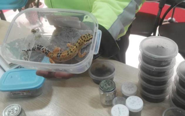 85 especímenes de vida silvestres exóticas fueron rescatadas de un basurero en el Puente Internacional de Rumichaca. Foto: Ministerio de Ambiente.
