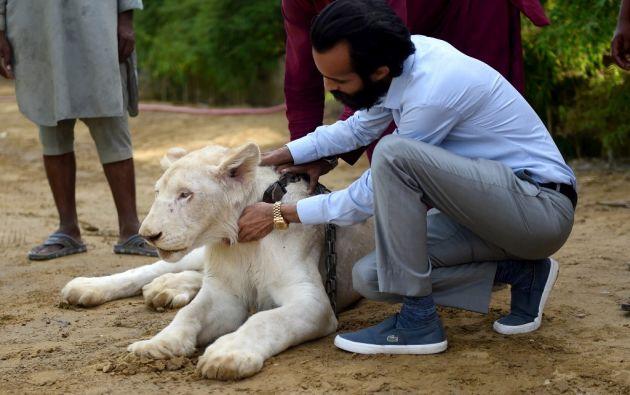 """""""Son... (algunos) de los animales más raros que poseo"""", se enorgullece este empresario de 29 años. Foto: AFP"""