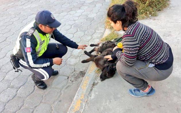 """En su cuenta de Twitter, Acción Animal escribió el viernes """"EMERGENCIA! ENVENENARON EL REFUGIO!"""" / Foto: @AMTQuito"""