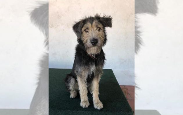 Monte es un perro rescatado que ahora se ha convertido en estrella de Disney.