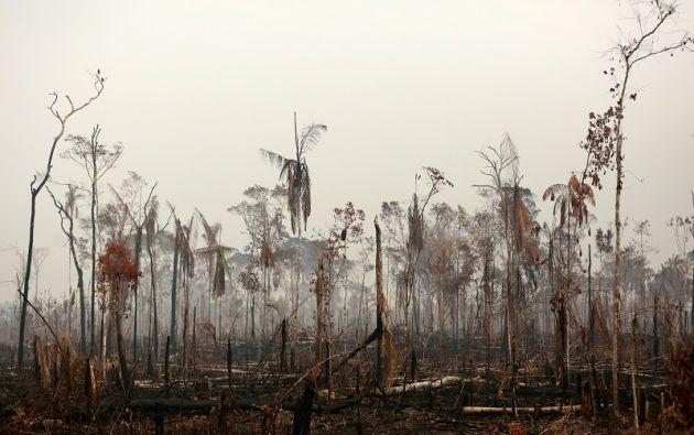 Se ve un tramo de la selva amazónica después de un incendio en Boca do Acre, estado de Amazonas. Foto: Reuters