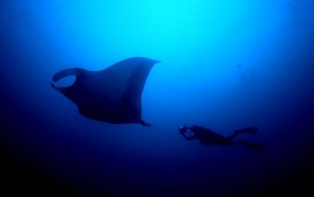 En las bodegas se encontró cerca de una tonelada de especies marinas, como tiburones martillo, zorro, silky (sedoso), azul y mako, y rayas.