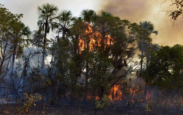 El nuevo convenio busca dar mayores herramientas de protección para la Amazonía. Foto: Reuters